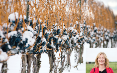 Icewine – Discover the beauty of this sweet and luxurious signature wine from Canada
